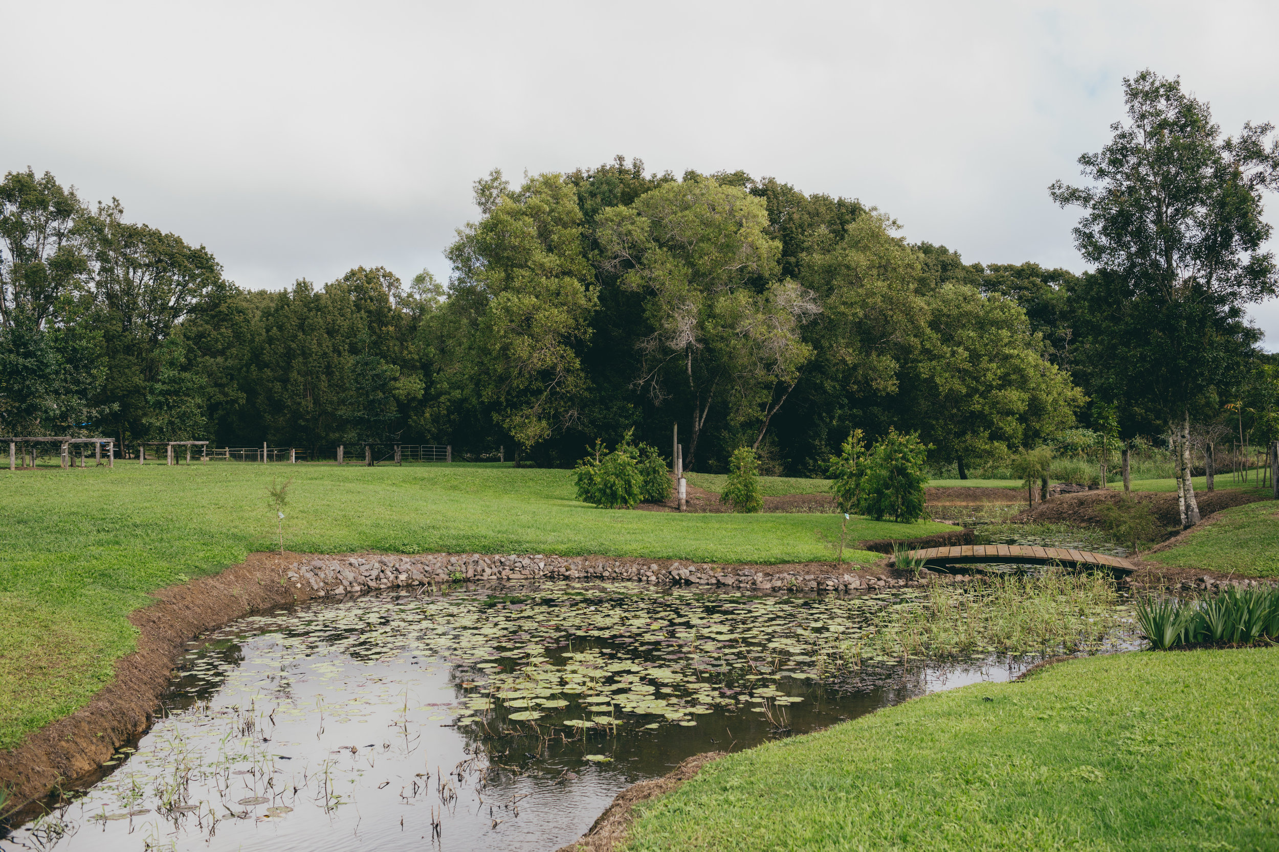 Property dam covered in lily pads