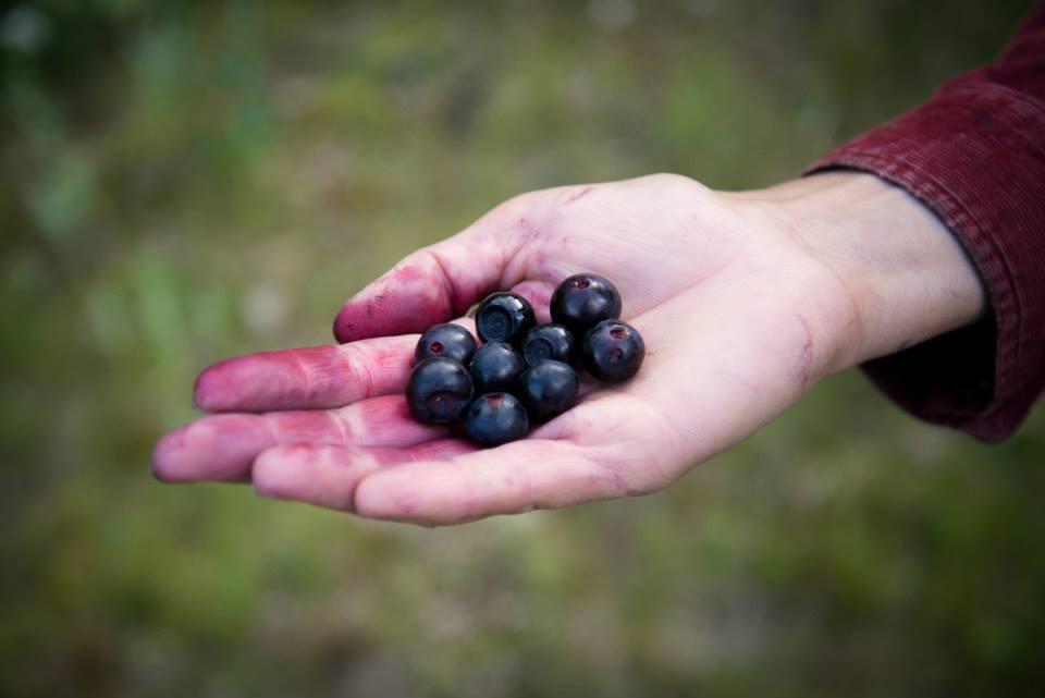 huckleberry 2.jpg