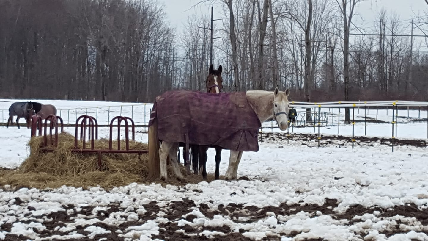 Horses can be hard on their blankets, and winter can be long!