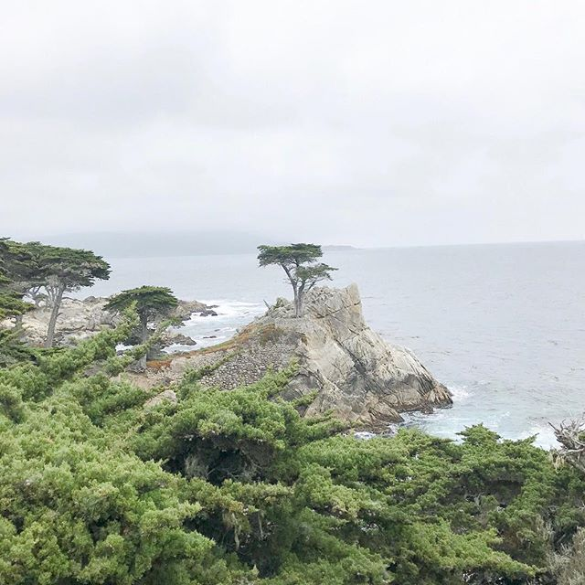 It's officially almost wedding season. I cannot wait to show off the hard work of my amazing team, but in the meantime, I'll be longing for the sea. There's something in the air near Carmel that's ridiculously romantic and peaceful. Road trip anyone?  #destinationwedding #destinationweddingplanner #carmelweddingplanner #carmelwedding #californiawedding #bytheseawedding ⠀⠀⠀⠀⠀⠀⠀⠀⠀ ⠀⠀⠀⠀⠀⠀⠀⠀⠀