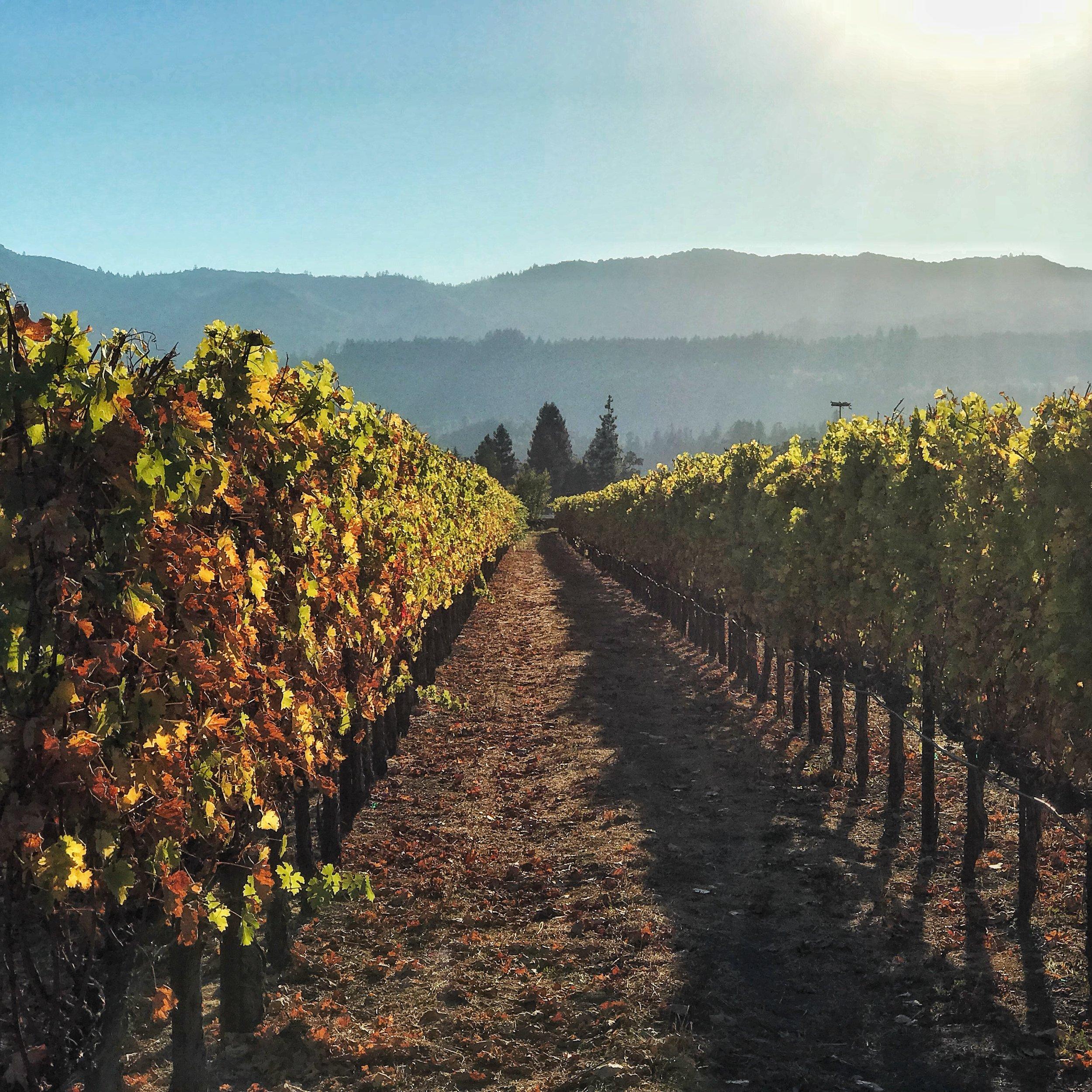 the fields of sullivan wine
