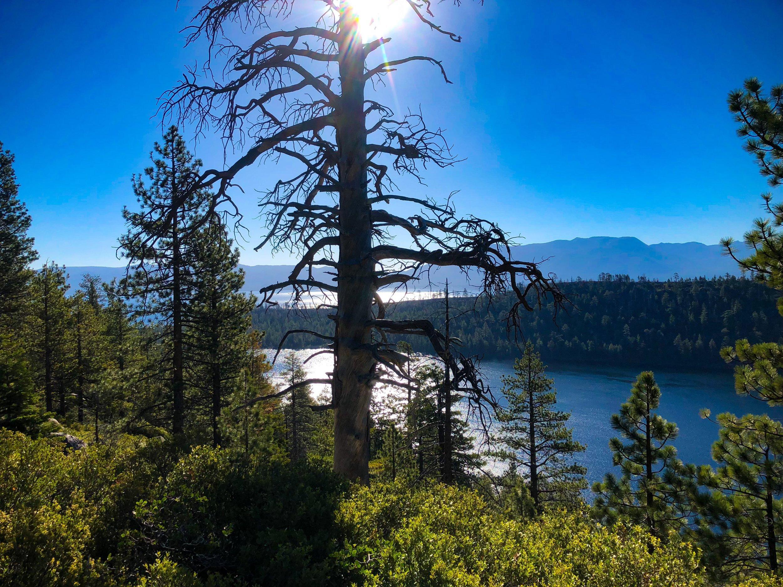 Fallen Leaf and Lake Tahoe