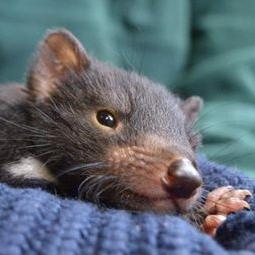 Baby Animal Encounter -