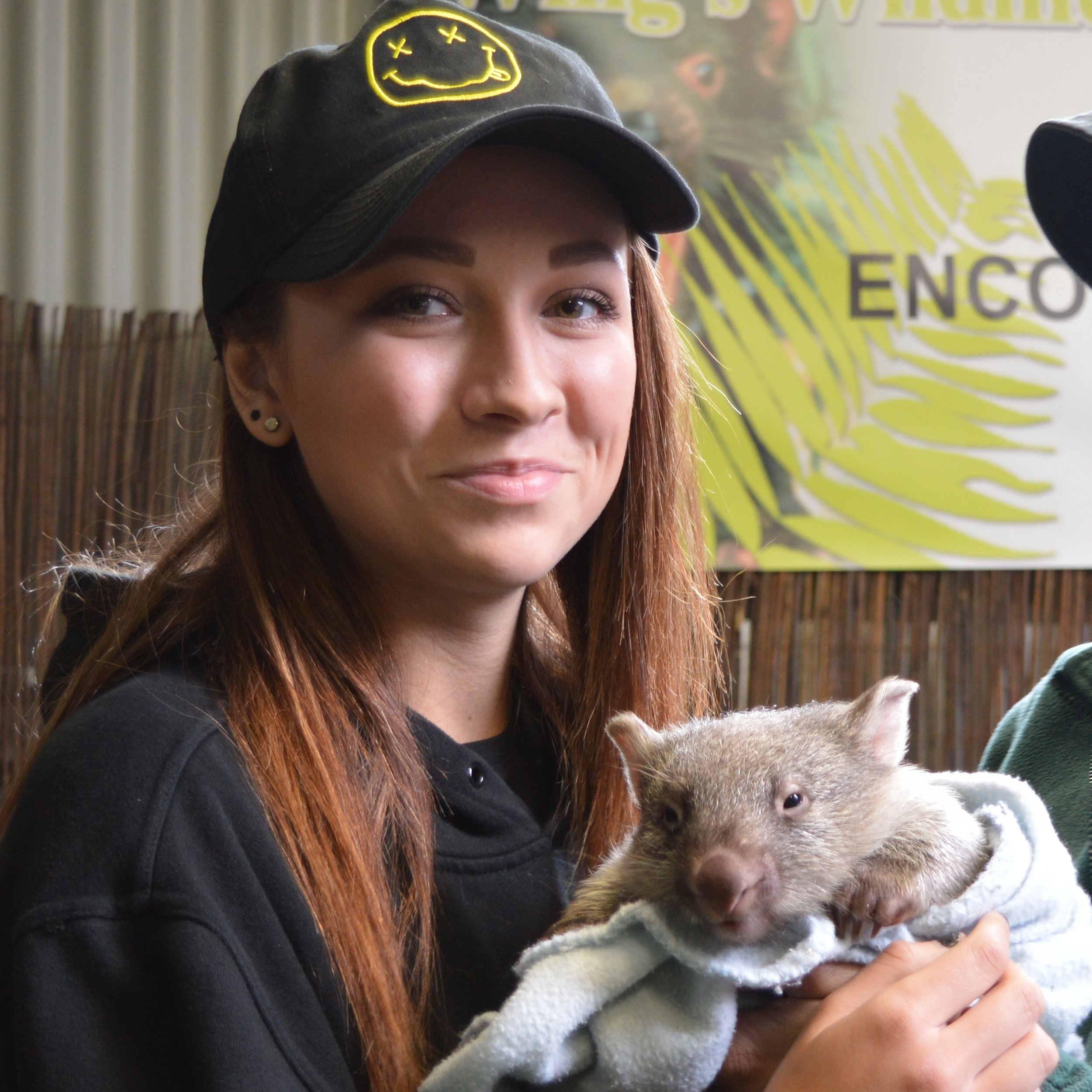 Wombat Encounter -