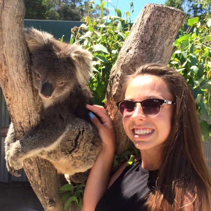 Koala Encounter -