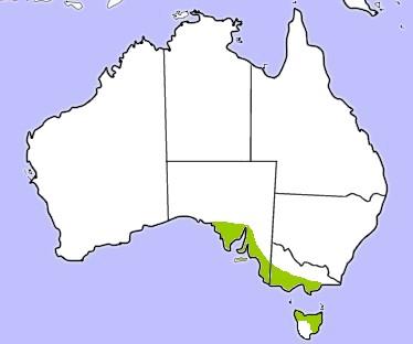 cbgoose-map.jpg
