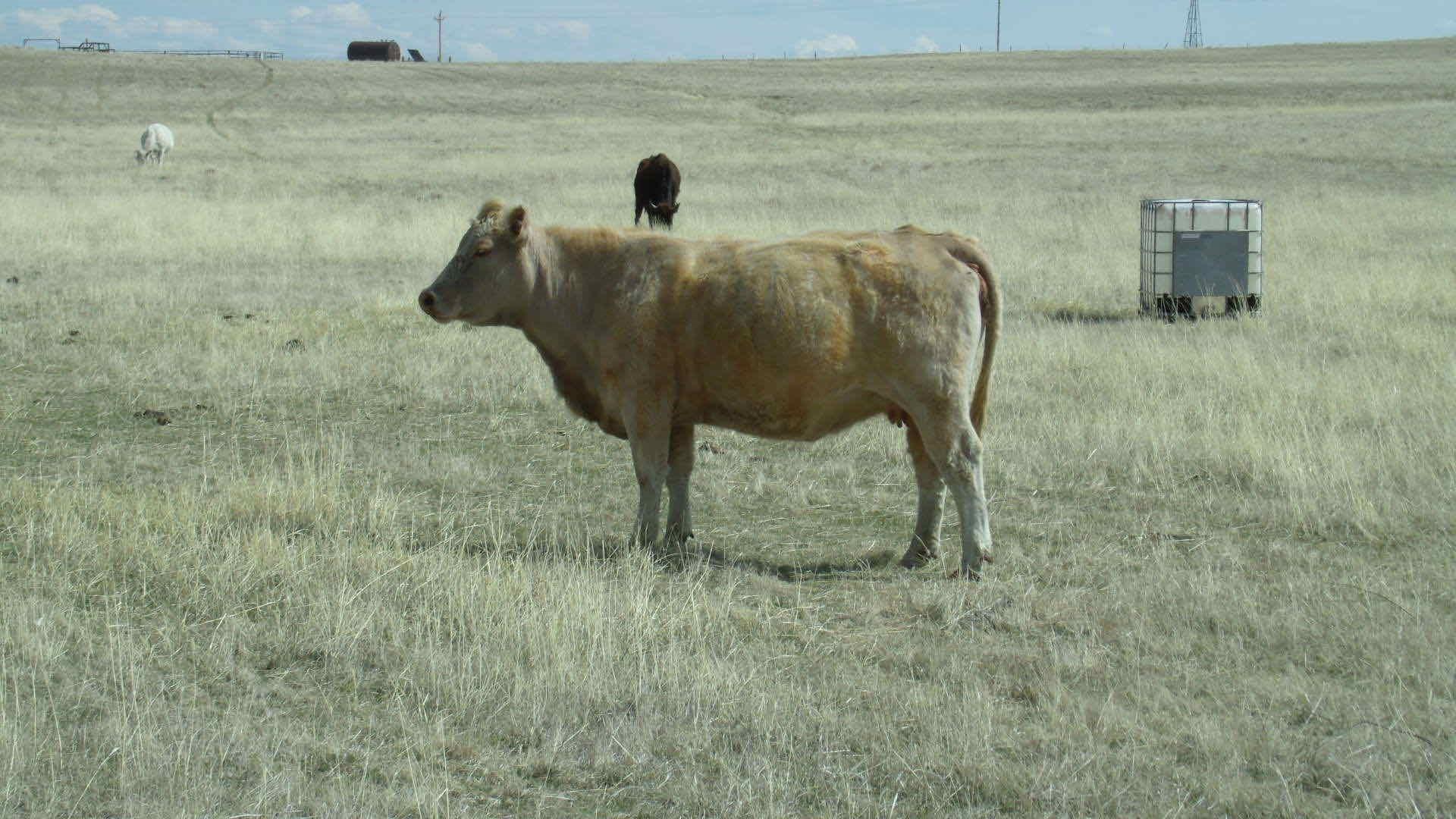 Paul Butler's farming photo