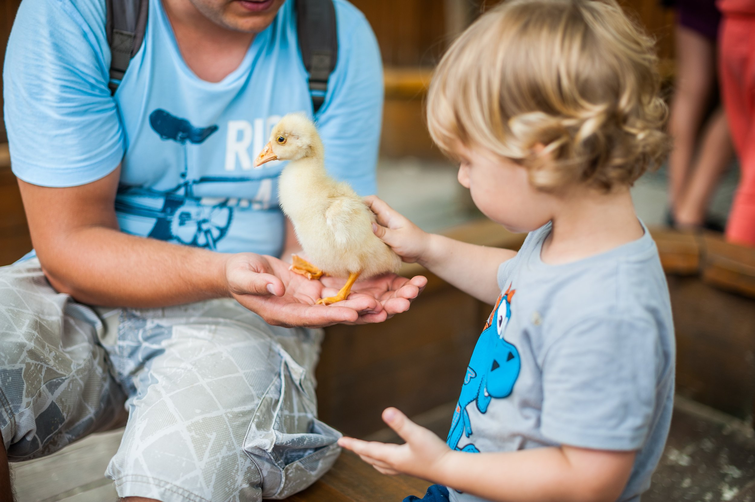 Petting Zoo at Paddy's Markets - Date: Sunday, 7 July 2019, 10:00am-1:00pmLocation: Paddy's Markets, FlemingtonPrice: FreeDetails: Come down to Paddy's Markets Flemington for a special pop up petting zoo! Introduce your little ones to goats, sheep, lamb, ducks, chicks, rabbits and more. The perfect way to make some new furry friends. While you are there, keep the bigger kids busy with plenty of food and shopping!