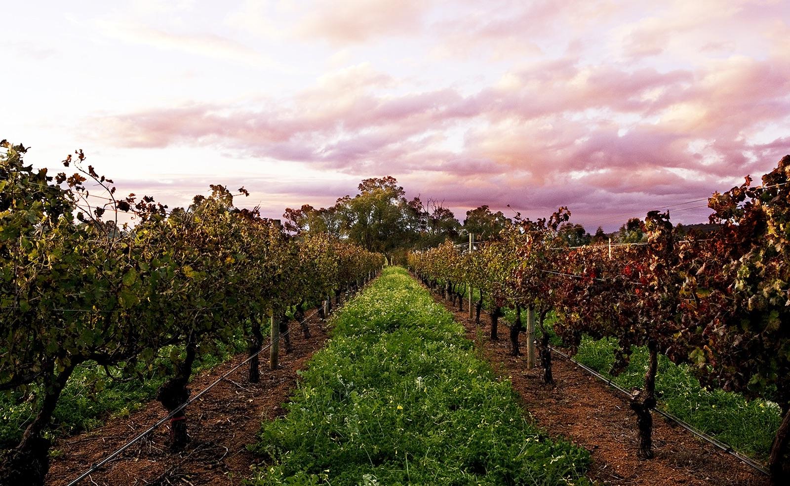 vineyard at dusk_WEB.jpg