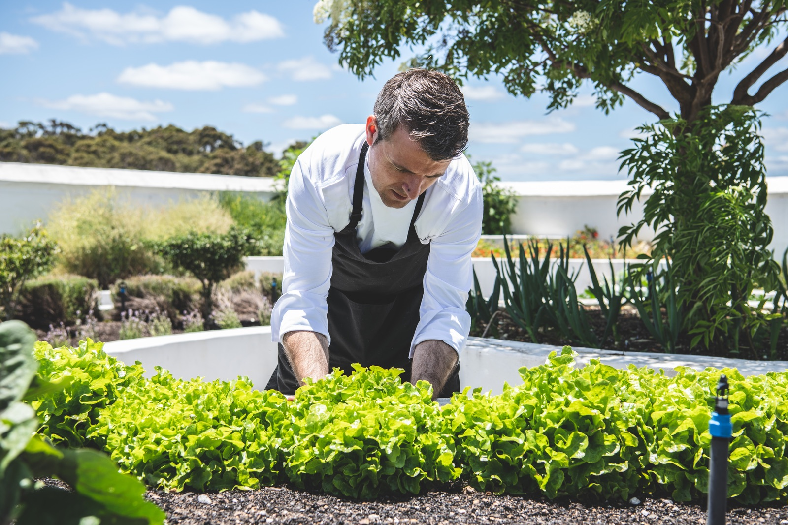 7 course WA Discovery Menu $120 - or $180 including wine pairingAvailability: 10am–5pm daily