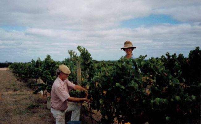 Barry & Judi hand harvesting their first vintage at Frankland Estate.