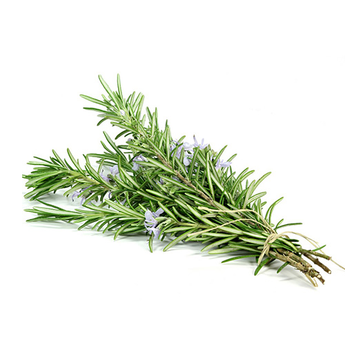 CAMPHOR ROSEMARY    Wellbeing : invigorating. refreshing. stimulating. improve circulation & arthritis   Skin : oily skin/acne   Massage : coconut oil mix with camphor rosemary for body & soul care. after sport