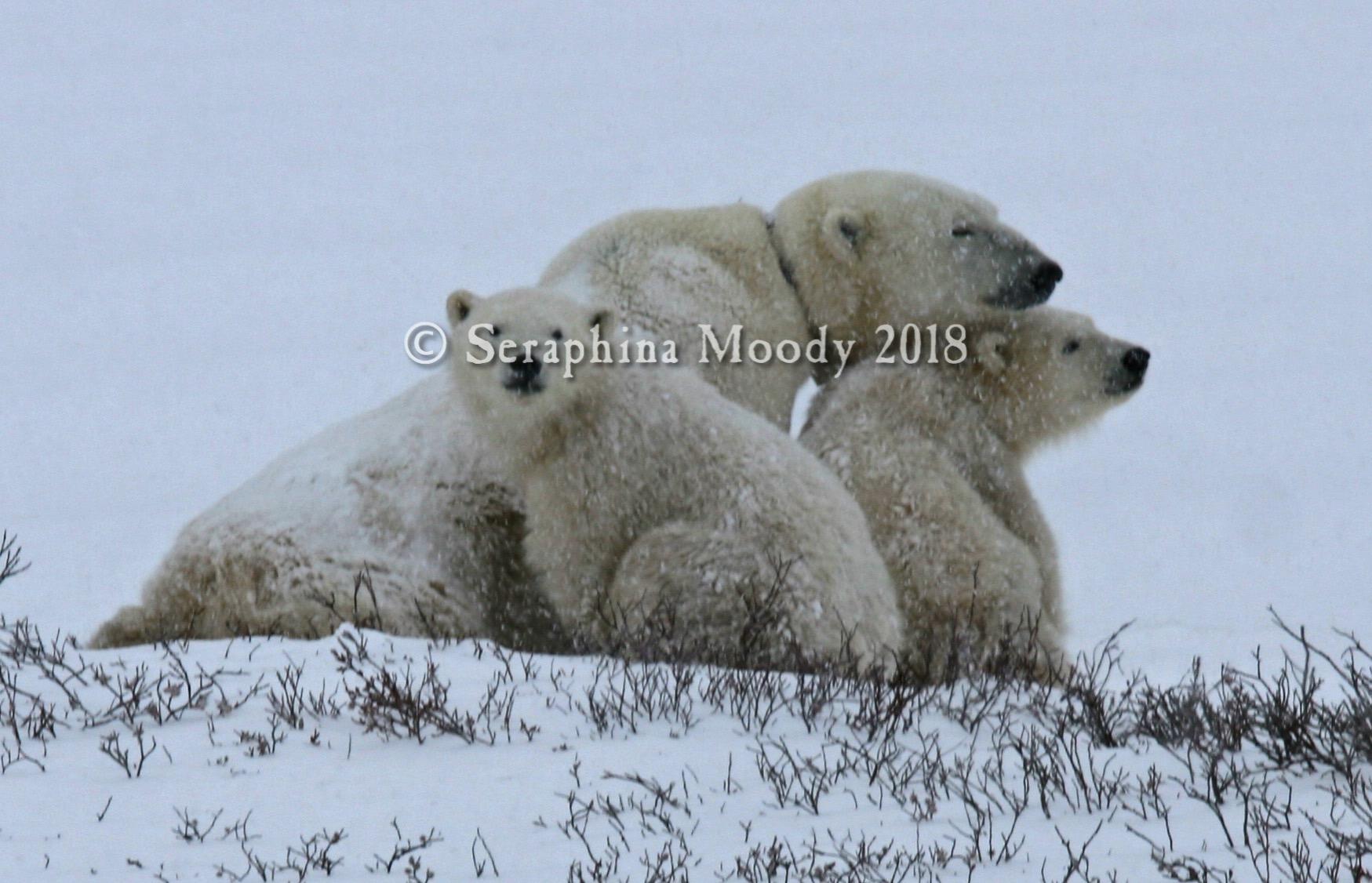 Churchill, Bears and Tundra Day 2 (132) edit.jpg