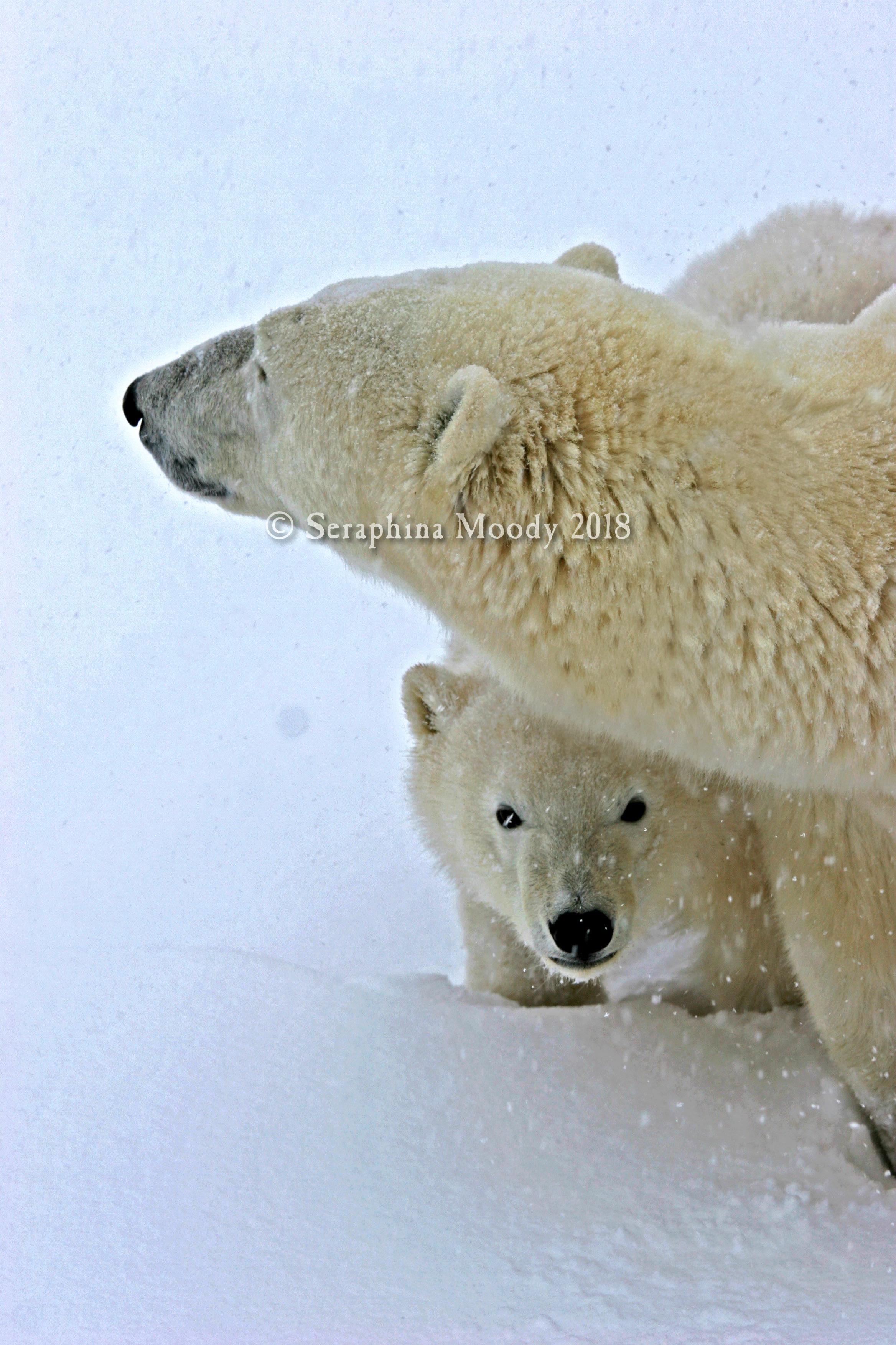 Churchill, Bears and Tundra Day 2 (168) final lighting edit.jpg