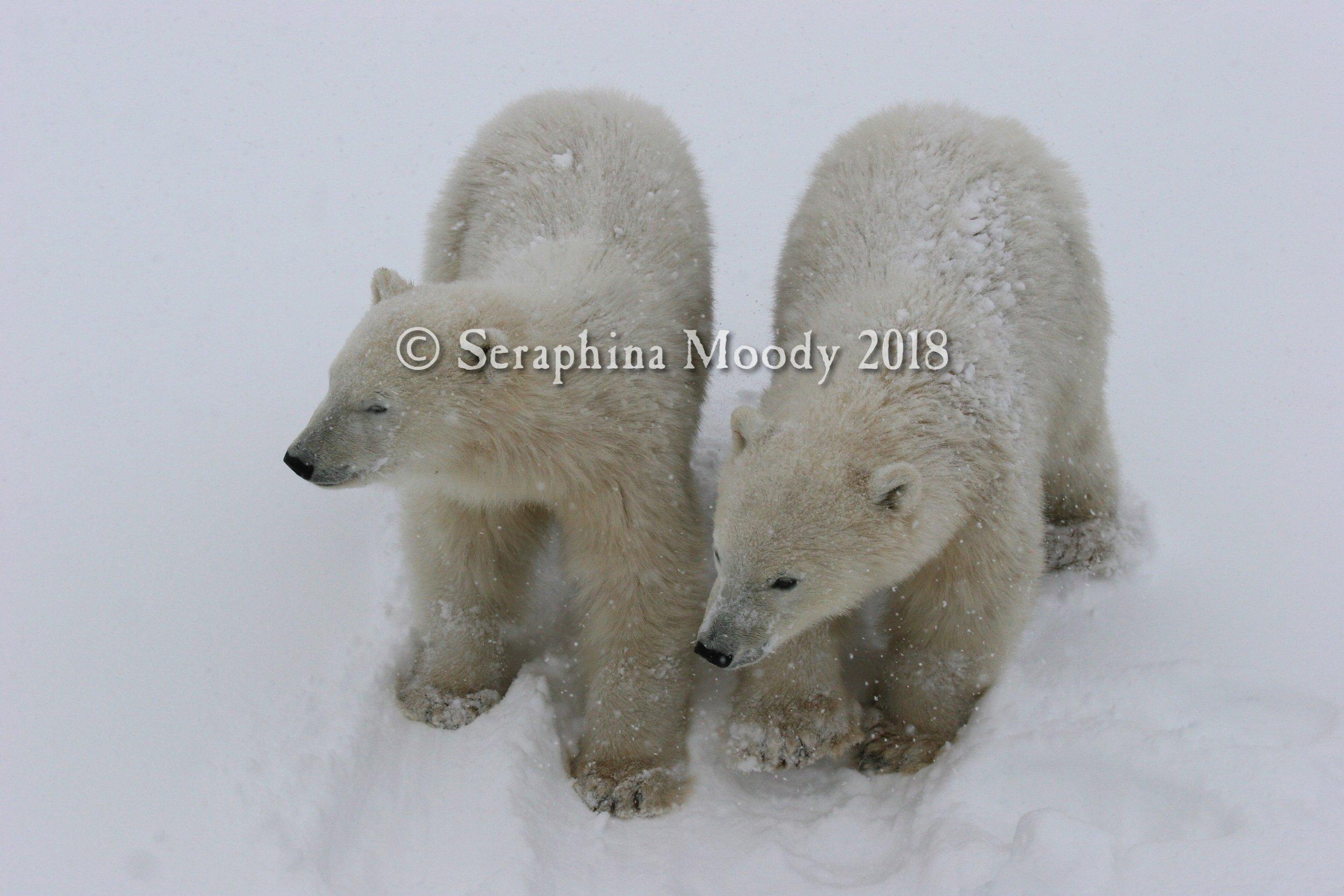 Churchill, Bears and Tundra Day 2 (175) e.jpg