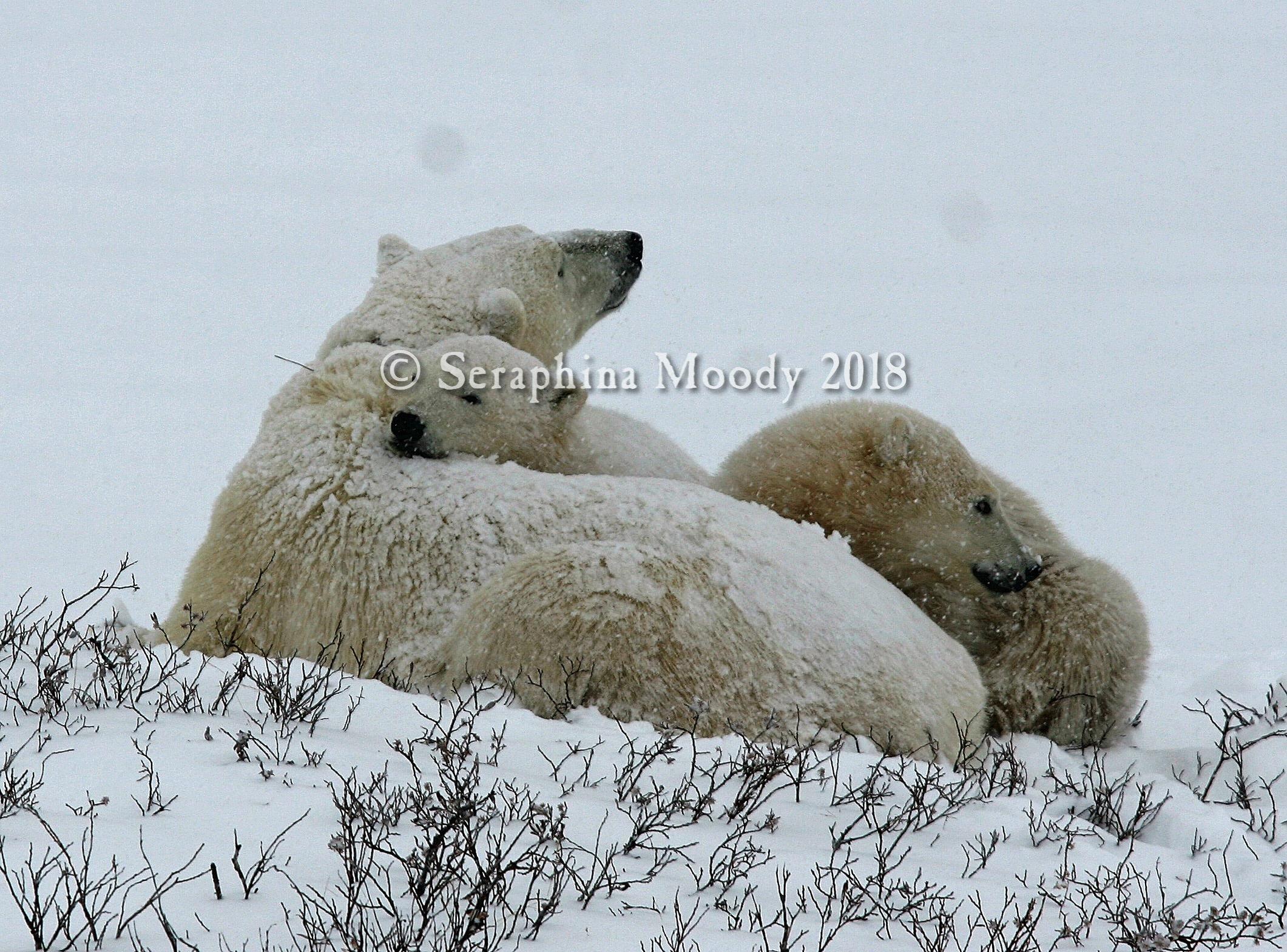 Churchill, Bears and Tundra Day 2 (262) a.jpg