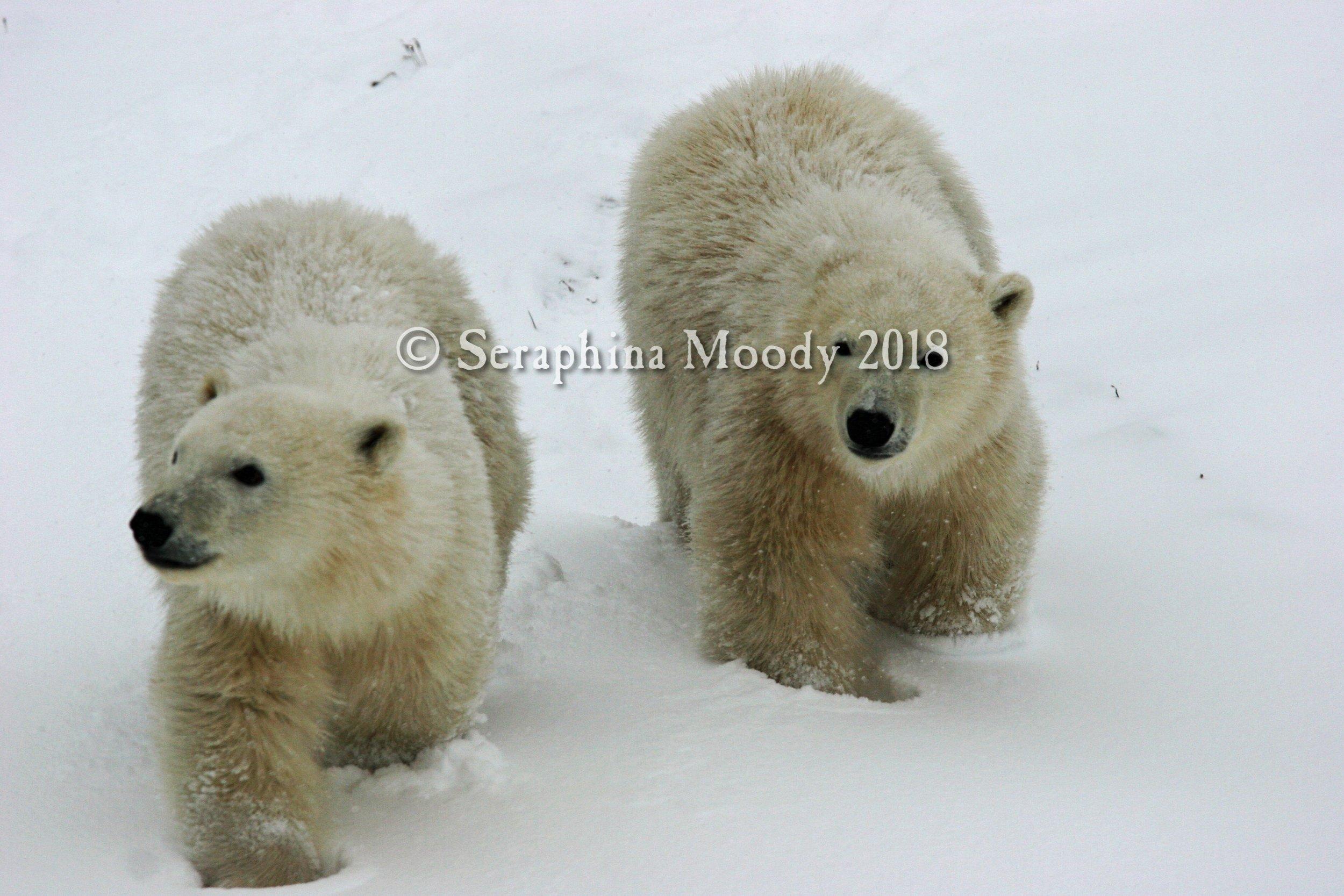 Churchill, Bears and Tundra Day 2 (294) o1.jpg