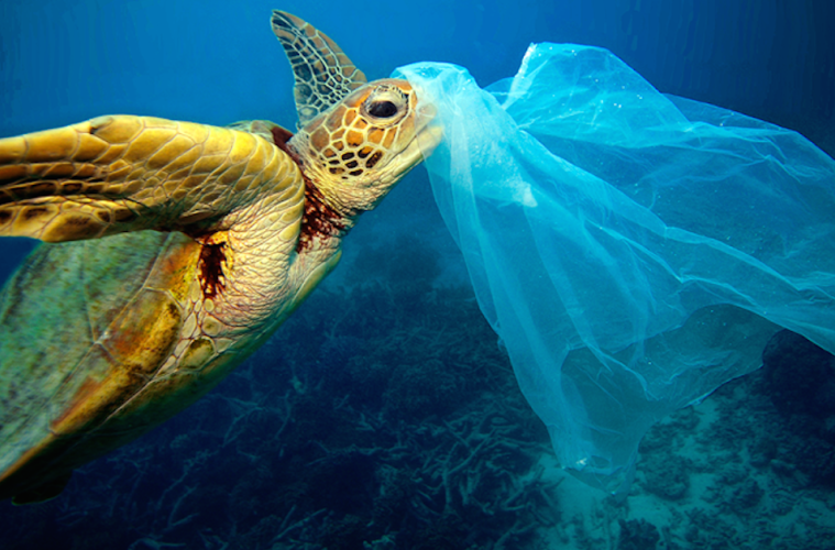 - Plastic bags are avoidable disposable plastic, and reusable grocery bags are widely available. Studies on dead sea turtles has found that more than 50% have plastic in their stomachs.