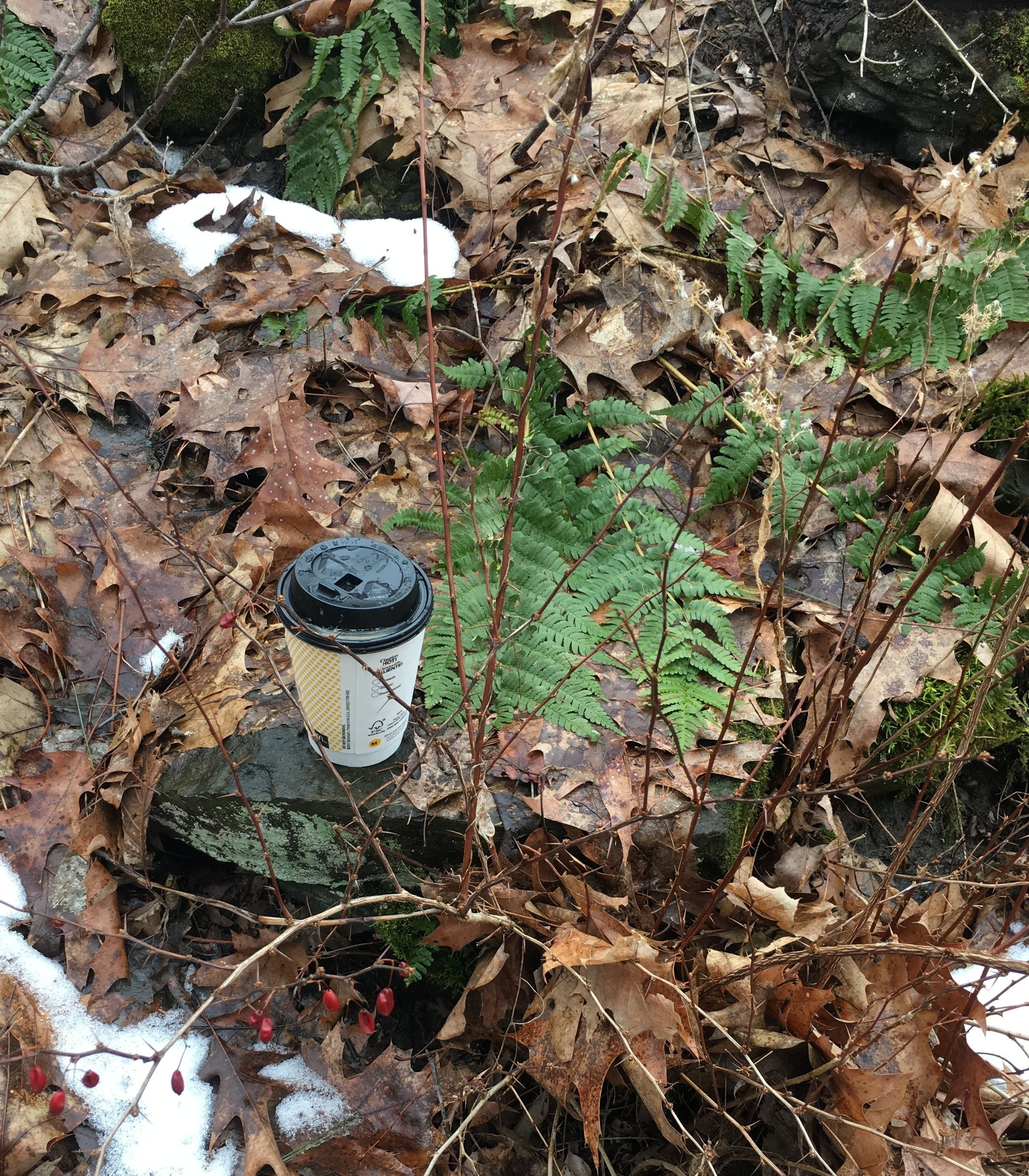Trash on a hiking trail in a state park