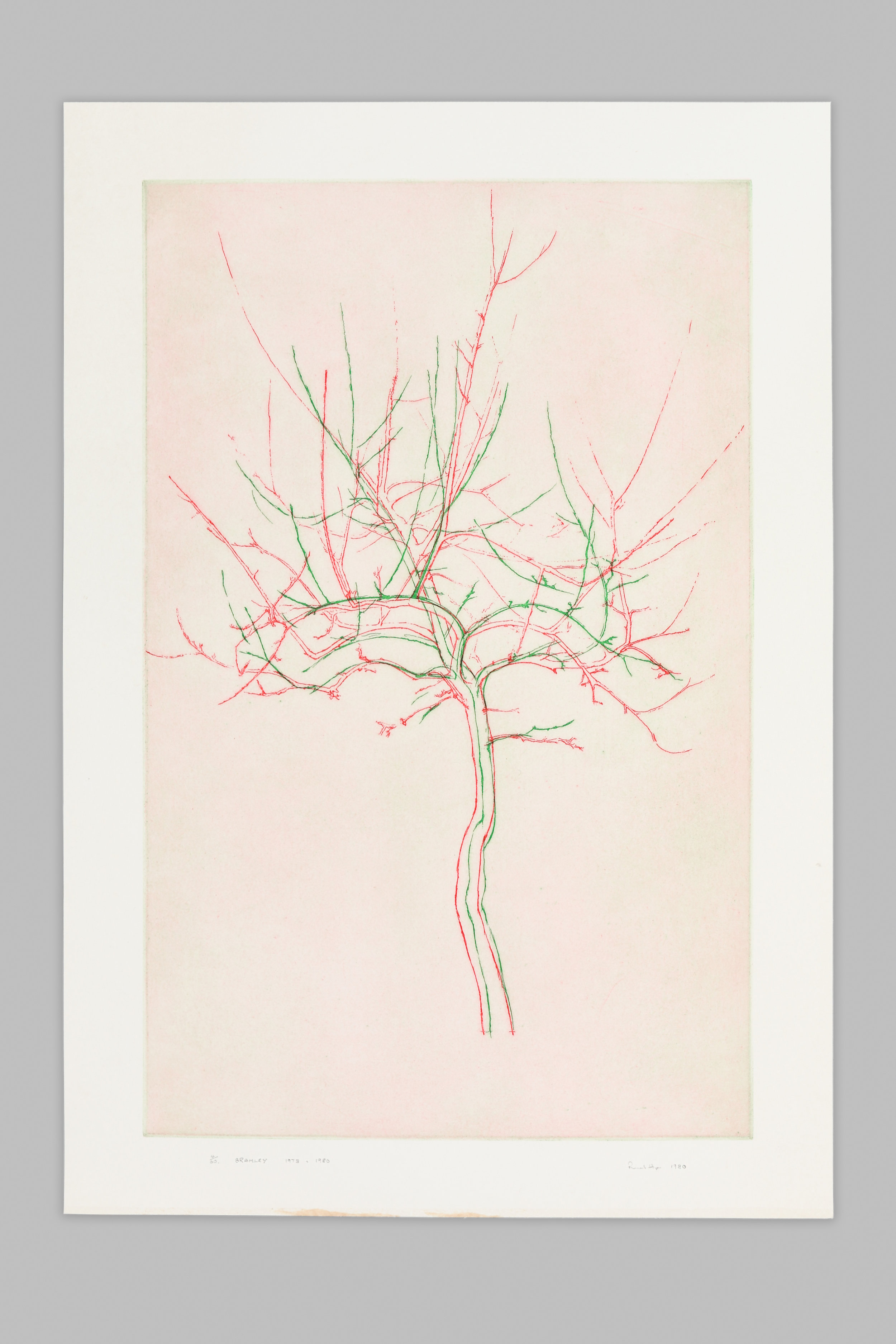 """A photograph of an etching titled """"Bramley"""". The artwork is semi-abstract and mainly uses green and red lines to create the impression of a tree."""