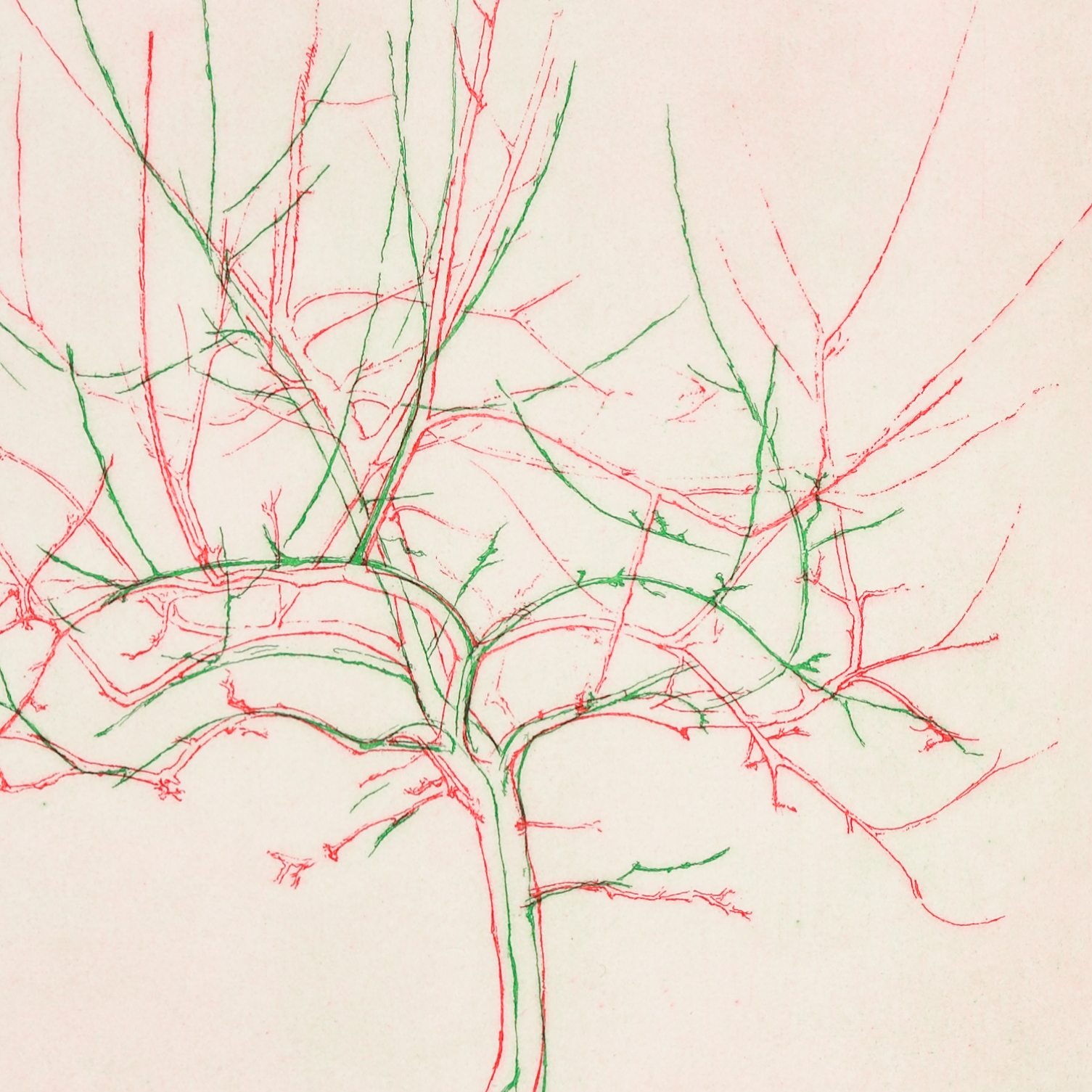 """A close up section of an etching titled """"Bramley"""". The artwork is semi-abstract and mainly uses green and red lines to create the impression of a tree."""
