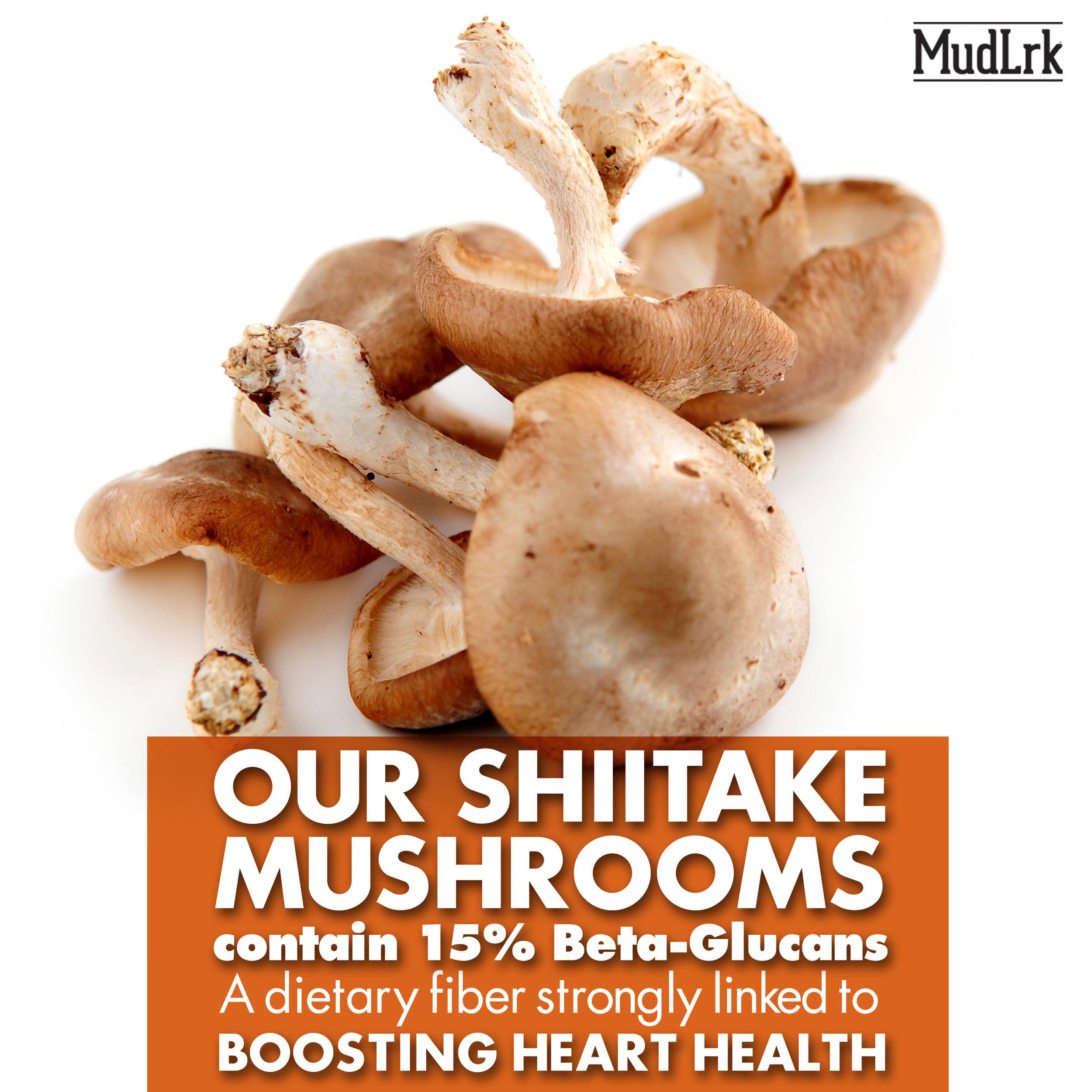 Mushrooms_BetaGlucans (2).jpg