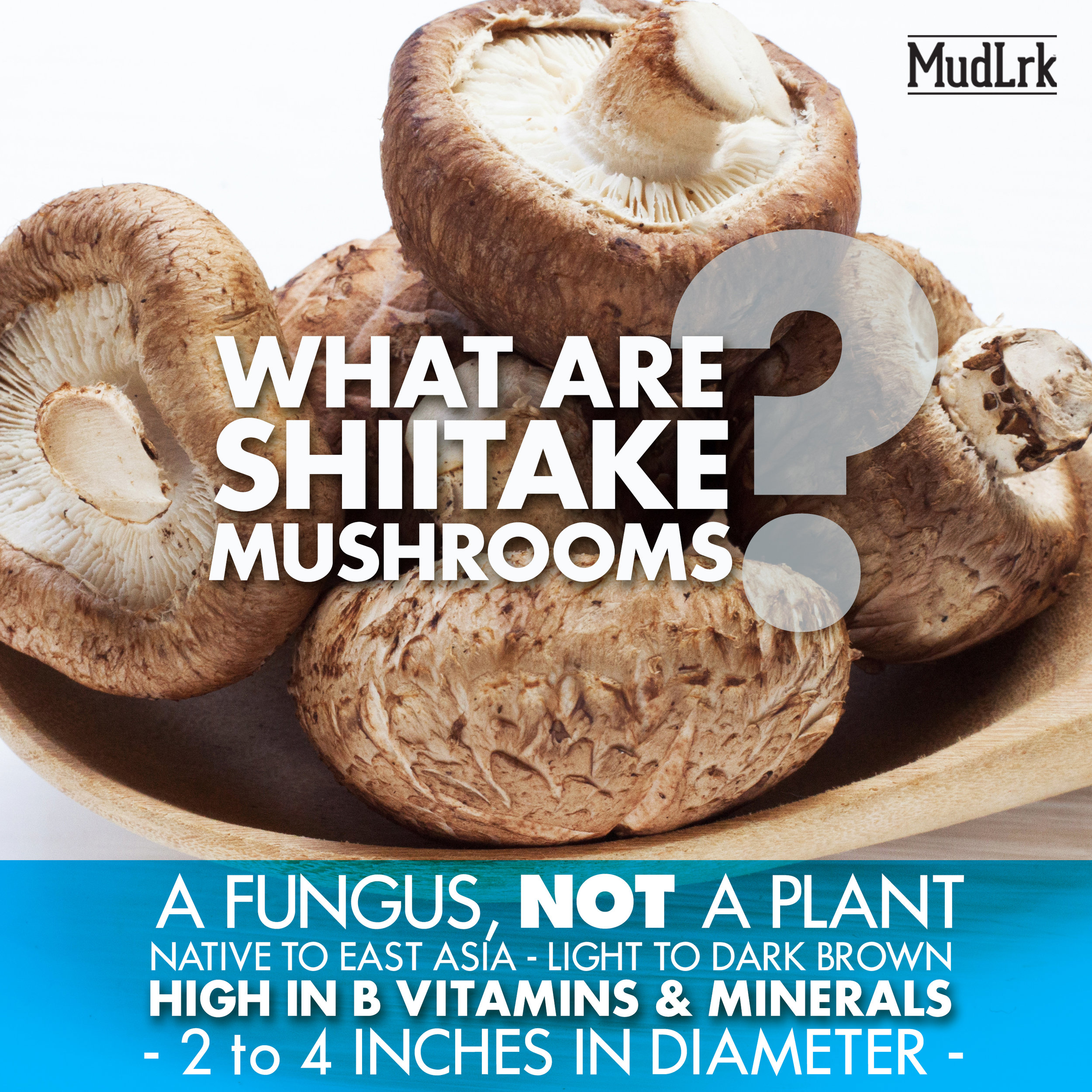 what-are-shiitake-mushroom-chips