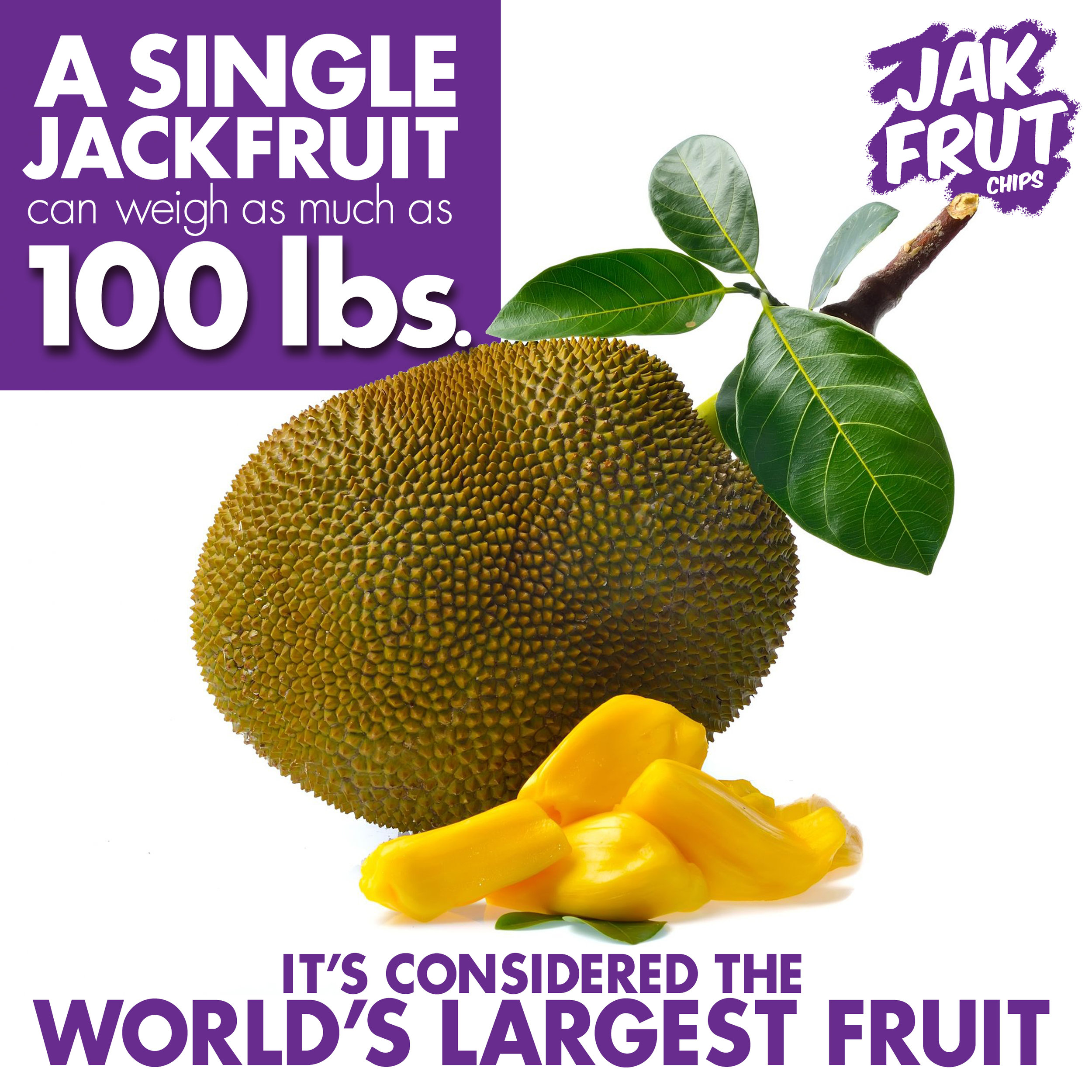 what-is-a-jackfruit-chip
