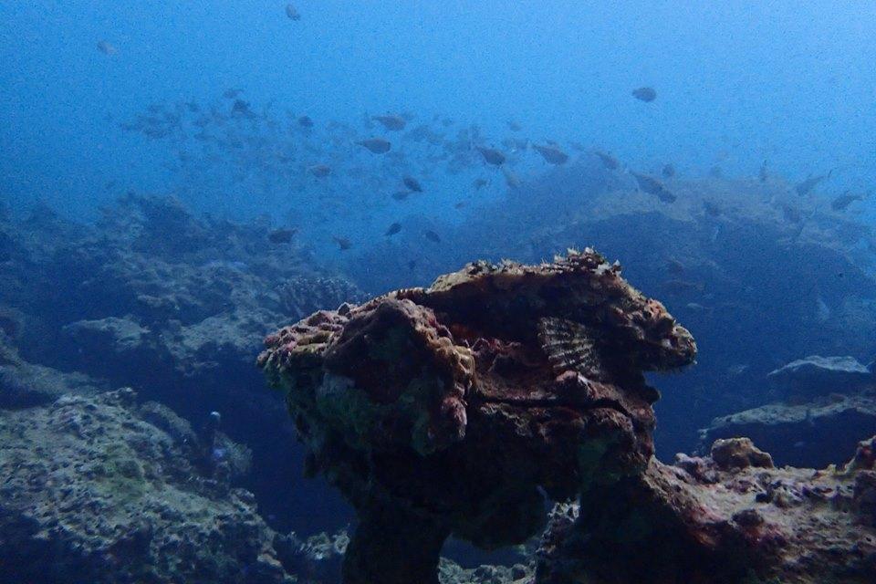 rock fish.jpg