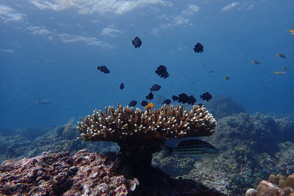 table coral.jpg