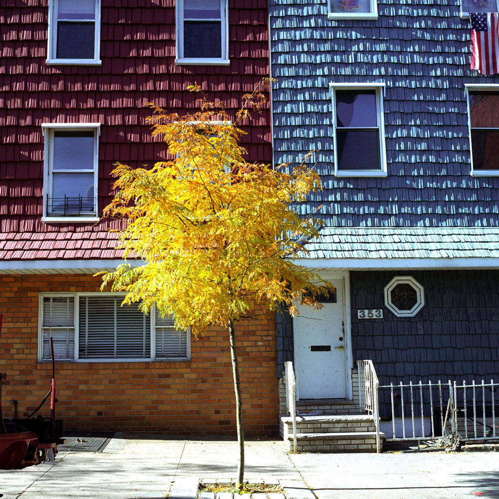 On My Block_Orange Tree and Front Door.jpg