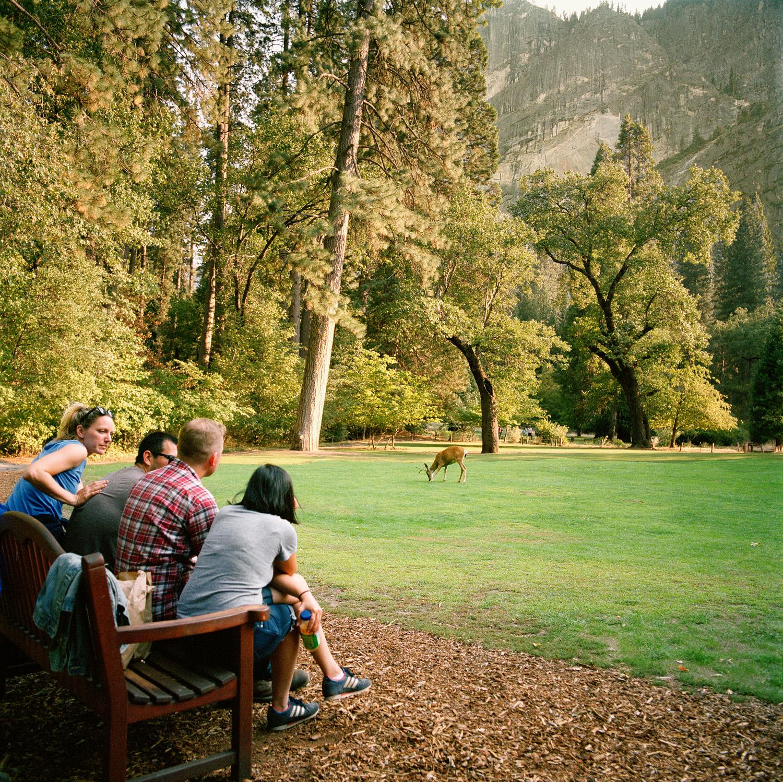 09_Parklife_Yosemite_DeeratAhwahnee.jpg