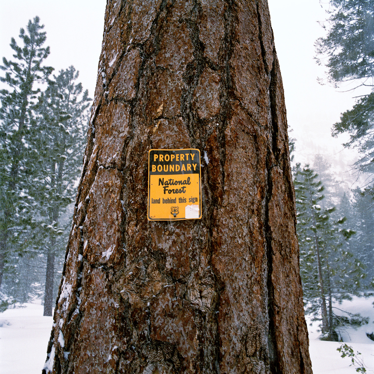 29_Parklife_Tahoe_NationalForestSign.jpg