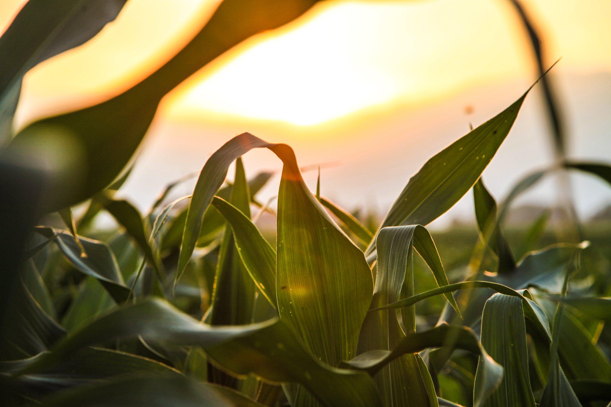Grain profits with blockchain   Farmtario  27 November 2018