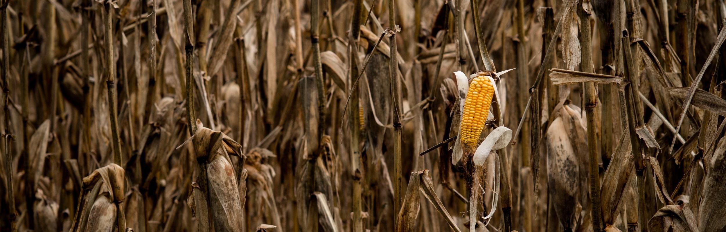 crop-3067356.jpg