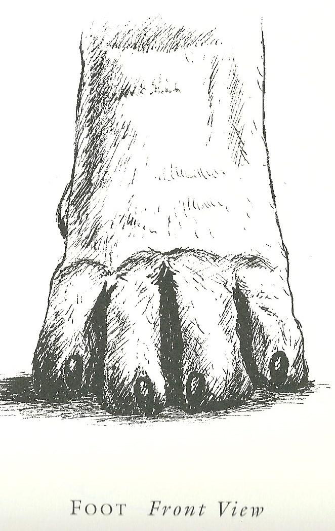 Correct feet  front.jpg