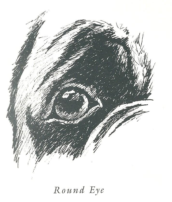 A round or 'poppy' eye