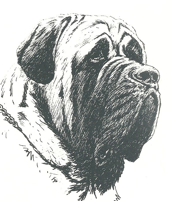 Short ears, wrinkled over nose/under the eyes, too long in jowl
