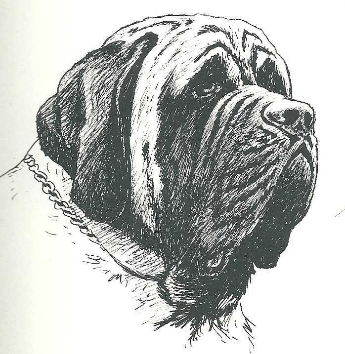 Long ears, wrinkled over nose/under the eyes, too long in the jowl.