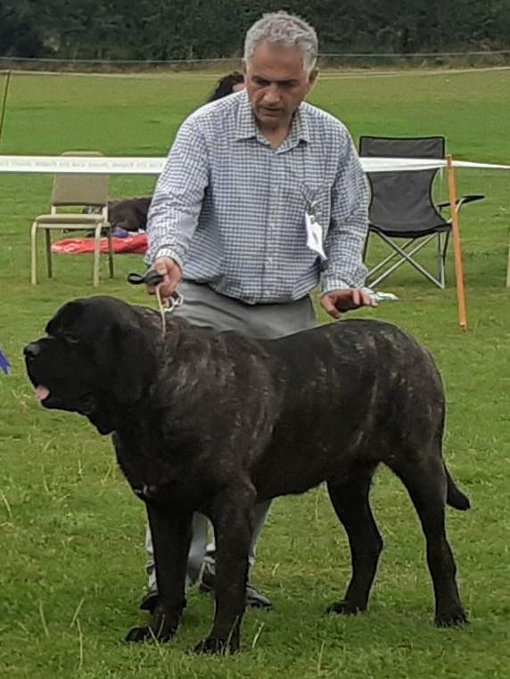 Dog CC & RBIS