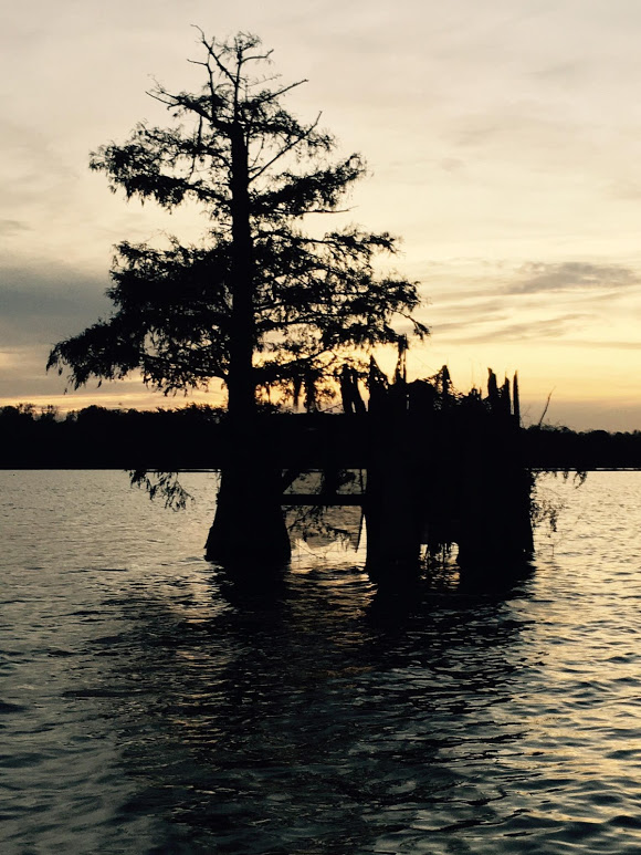 swamp-snaps-2016-003.jpg