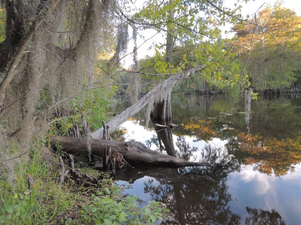swamp-snaps-2016-006.jpg
