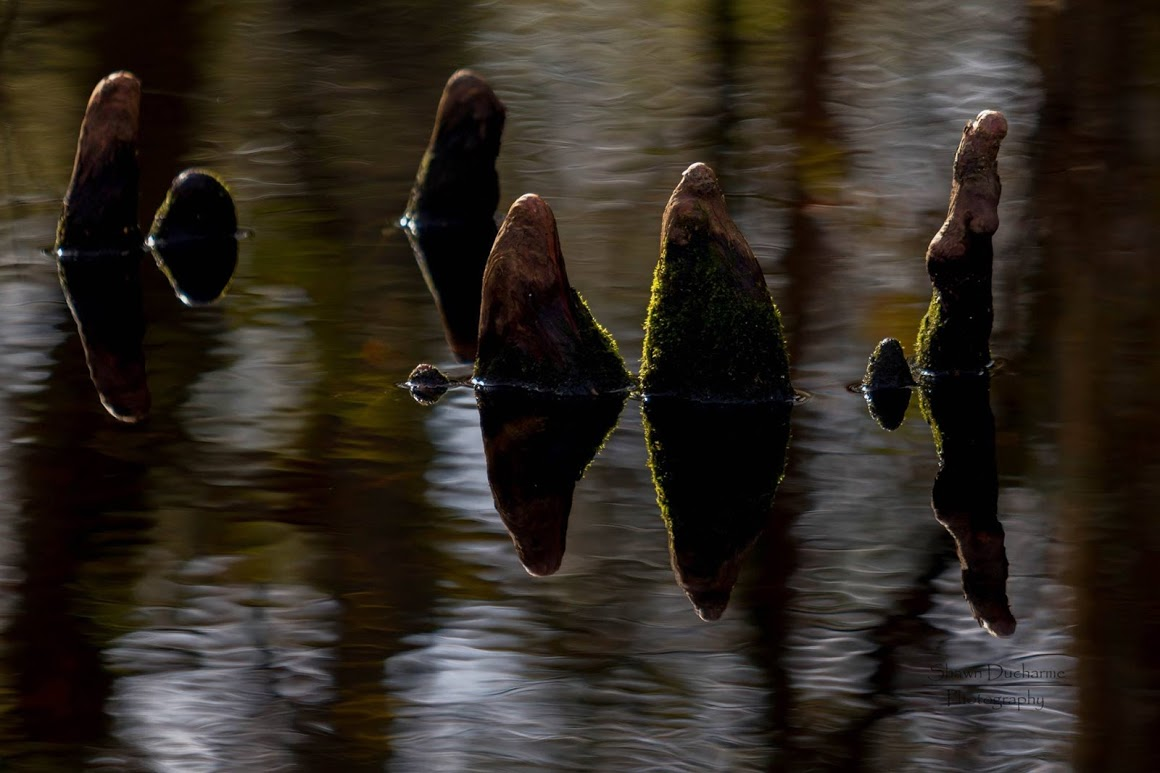 swamp-snaps-2016-018.jpg