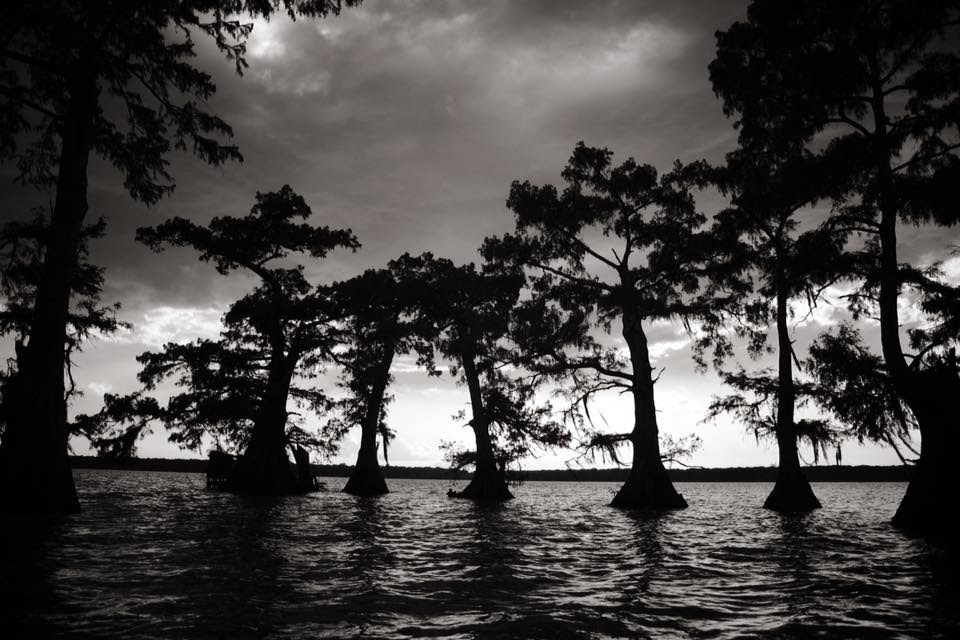 swamp-snaps-2016-020.jpg