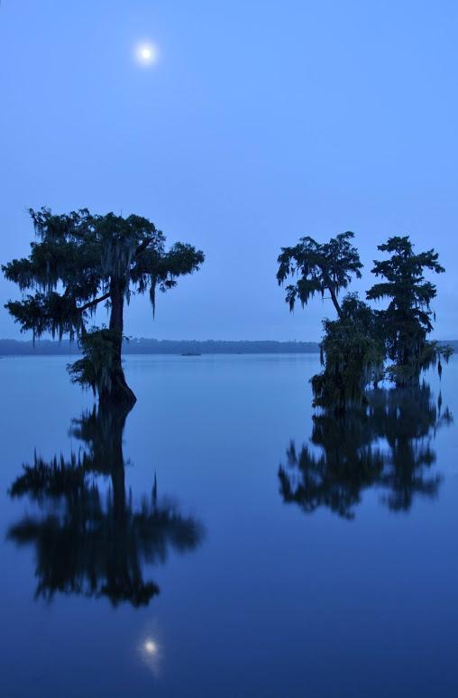 swamp-snaps-2016-021.jpg