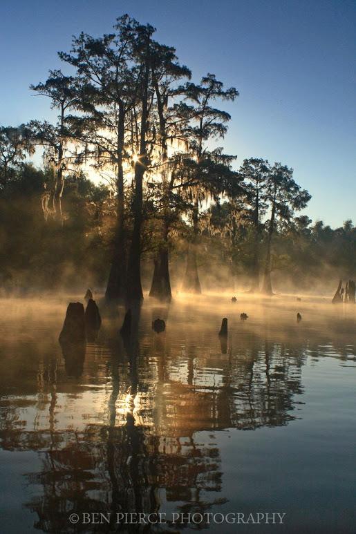 swamp-snaps-2016-025.jpg