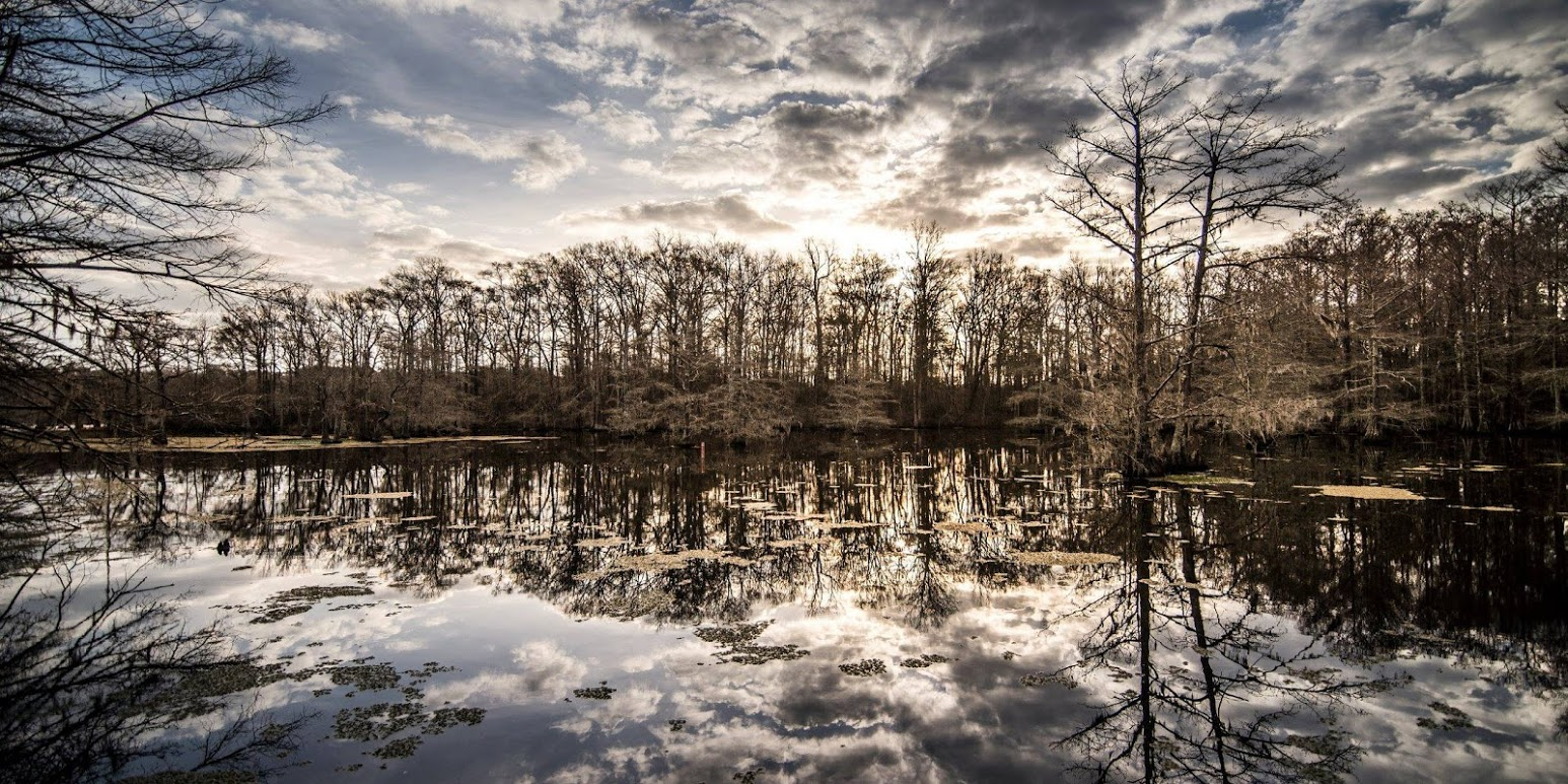 swamp-snaps-2016-023.jpg