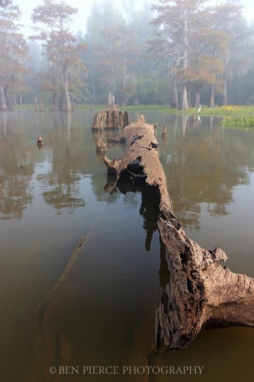 swamp-snaps-2016-031.jpg
