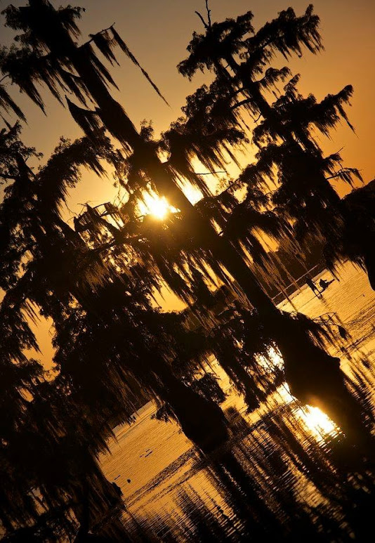 swamp-snaps-2016-034.jpg