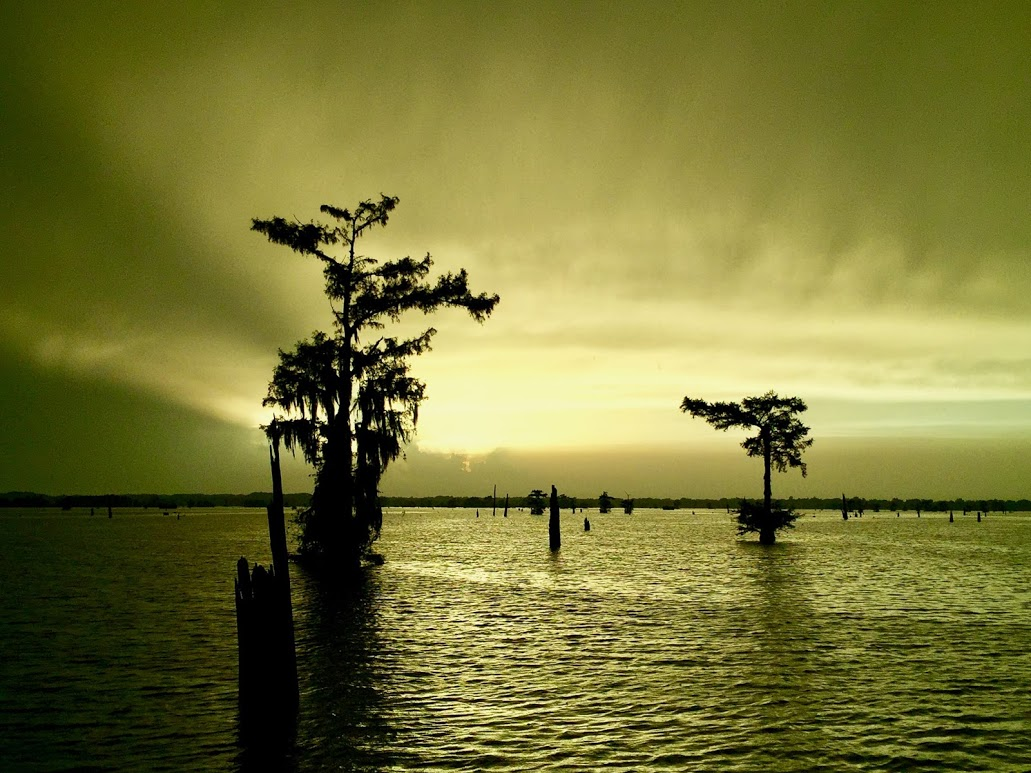 swamp-snaps-2016-035.jpg